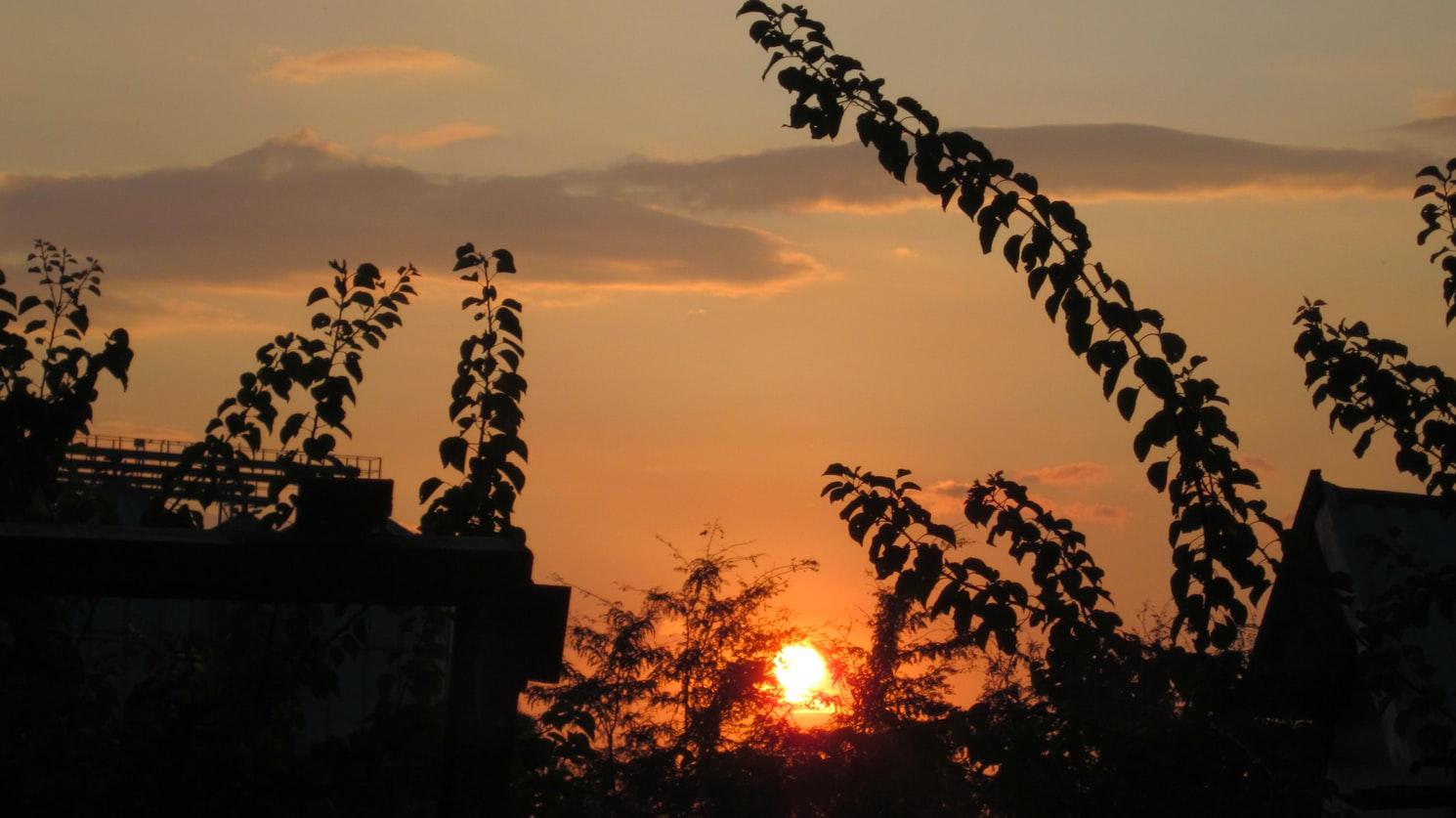 새벽 (Dawn)